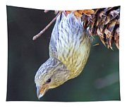 A Little Bird Eating Pine Cone Seeds  Tapestry