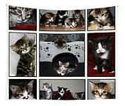 A Montage Of Kittens Tapestry