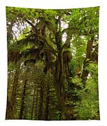A Moss Covered Tree  In The Ho National Rain Forest Tapestry