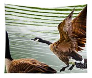 A Pair Of Canada Geese Landing On Rockland Lake Tapestry