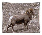 A Ram Climbing  Tapestry