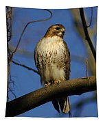 A Red Tail Hawk Tapestry