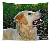 A Retriever's Loving Glance Tapestry