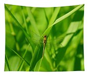 A Small Dragonfly Tapestry