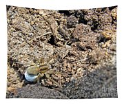 A Spider With The Egg Sack Tapestry