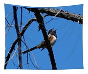 A Spotted Towhee Mid-song Tapestry