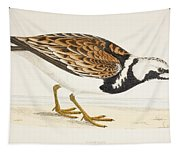 A Turnstone. Arenaria Interpres. From A Tapestry