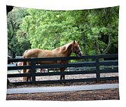 A Very Beautiful Hilton Head Island Horse Tapestry
