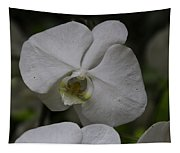 A White Orchid Flower Inside The National Orchid Tapestry