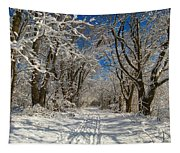 A Winter Road Tapestry