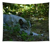 A Wolf Naps Tapestry