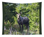 A Young Moose  Tapestry