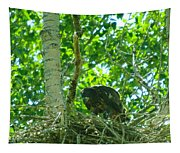 Adolescent Eagle Eating A Fish Tapestry