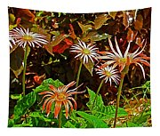 African Daisies In Aswan Botanical Garden On Plantation Island In Aswan-egypt Tapestry