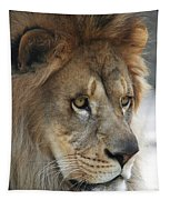 African Lion #8 Tapestry