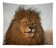 African Lion-animals-image Tapestry