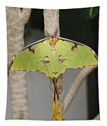 African Moon Moth Tapestry