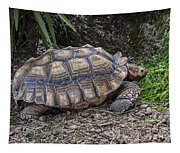 African Spurred Tortoise Tapestry
