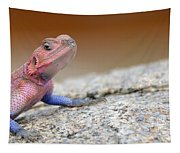 Agama Tapestry
