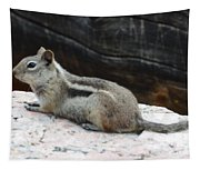 Albert Squirrel Tapestry