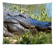Alligator Smiling Tapestry