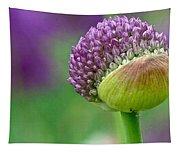 Allium Blooming Tapestry