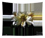 Alstroemeria Named Marilene Staprilene Tapestry