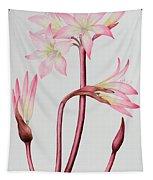 Amaryllis Belladonna Tapestry