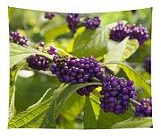 American Beautyberry -callicarpa Americana Tapestry