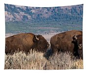 American Bison Trio Tapestry