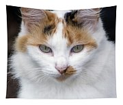 American Calico Cat Portrait Tapestry