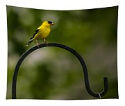 American Goldfinch Perched On A Shepherds Hook Tapestry