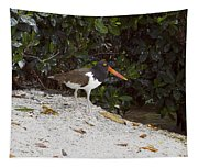 American Oystercatcher Tapestry