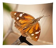 American Snout Butterfly Tapestry