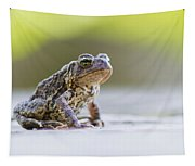 American Toad Tapestry