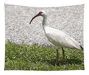 American White Ibis Poster Look Tapestry
