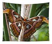 An Atlas Moth  Tapestry