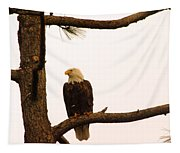 An Eagle Day Dreaming Tapestry