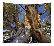 Ancient Bristlecone Tapestry