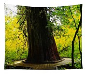 Ancient Old Growth Tapestry