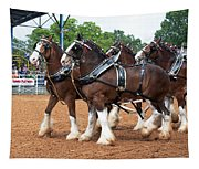 Anheuser Busch Budweiser Clydesdale Horses In Harness Usa Rodeo Tapestry