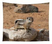 Antelope Ground Squirrel Tapestry