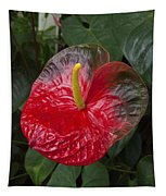 Anthurium Flamingo Flower Beauty Queen Fine Art Photography Print Tapestry
