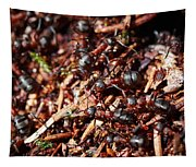 Ants Tapestry