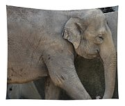 Asian Elephant Tapestry