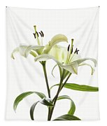 Asiatic Lily Flowers Against White Tapestry