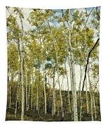 Aspen Trees In Spring  Tapestry