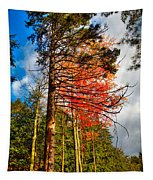 Autumn Color In The Trees Tapestry