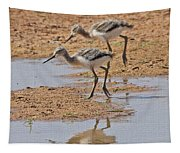 Baby Avocets At Grp Tapestry