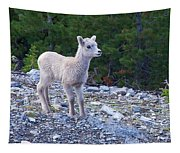Baby Big Horn Sheep Tapestry